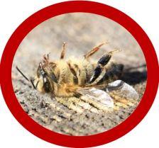 Bie død2
